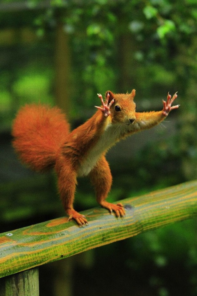 cheerleading squirrel links