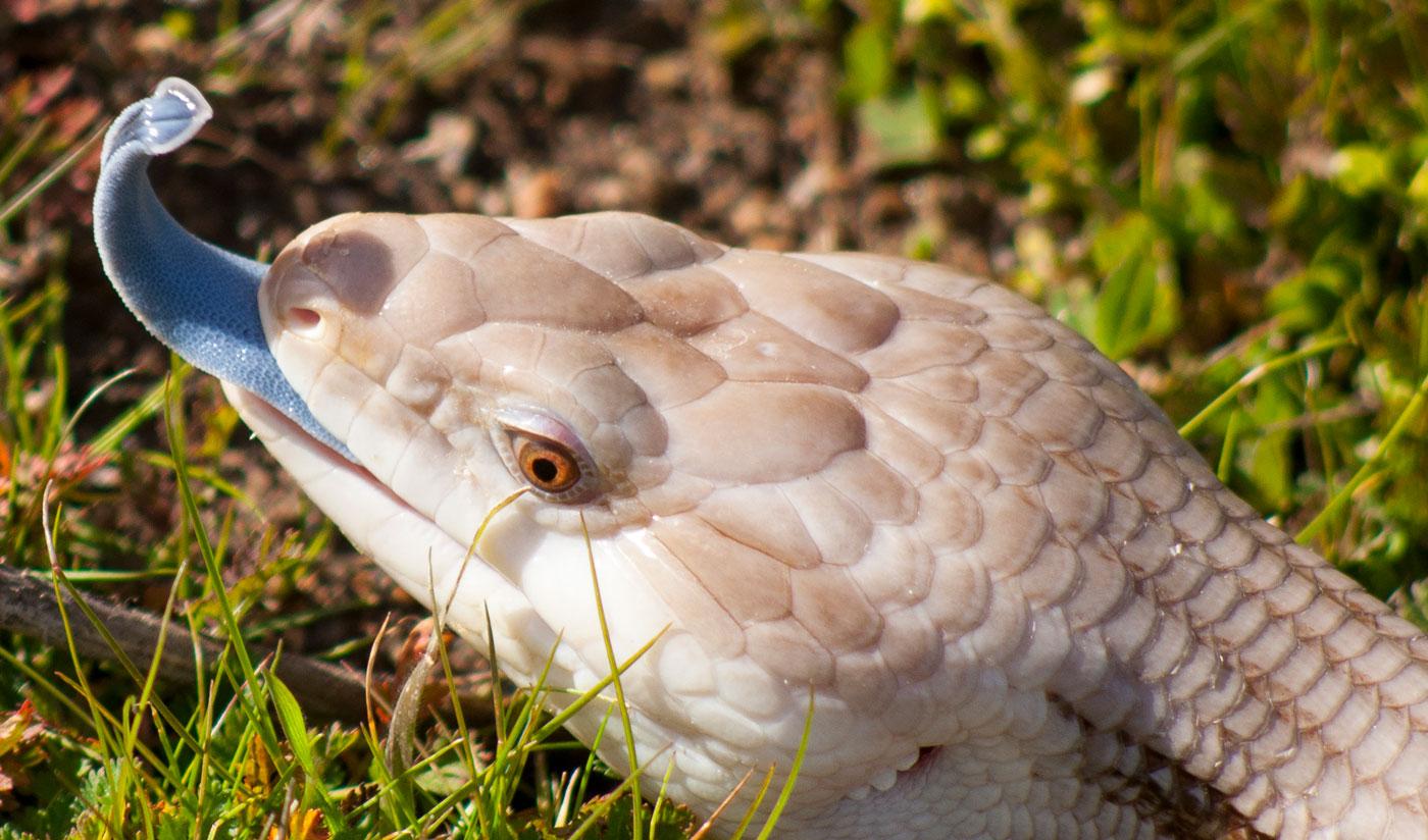 cute snake links