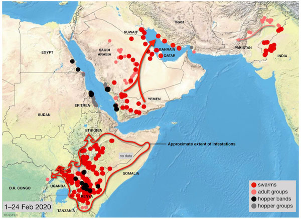 2020's Plague of Locusts: Updates on Africa and Pakistan ...