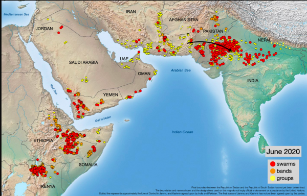 2020's Plague of Locusts Spreads to Indian Subcontinent and South America 2