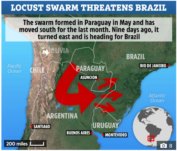 2020's Plague of Locusts Spreads to Indian Subcontinent and South America 4