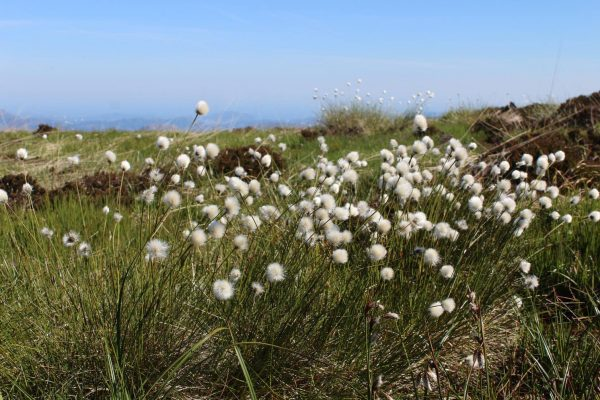 Wind Farms Built on Carbon-Rich Peat Bogs Lose Their Ability to Fight Climate Change 2