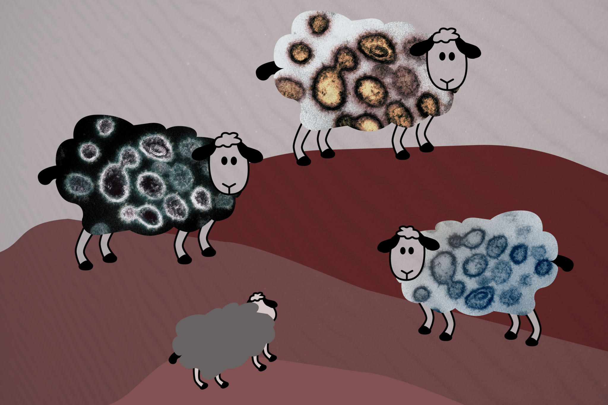 Corralling the Facts on Herd Immunity 2