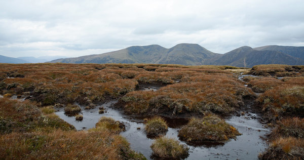 Peat: Superhero of the Biosphere, in Need of Global Protection (and Yours) 2