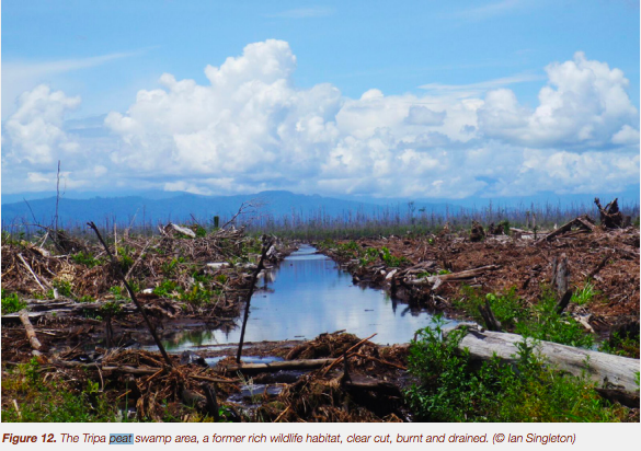 Peat: Superhero of the Biosphere, in Need of Global Protection (and Yours) 3